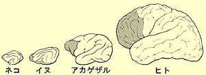 初心者でも超簡単!マントラを味方につける瞑想方法(脳への効果もアリ)